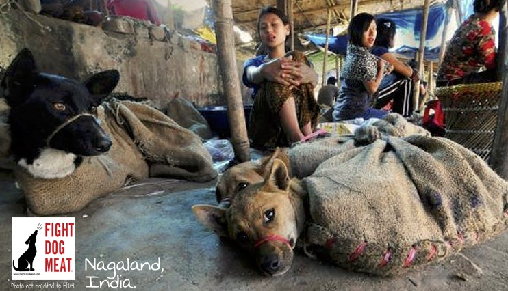 India Nagaland Dog Meat Market Fight Dog Meat