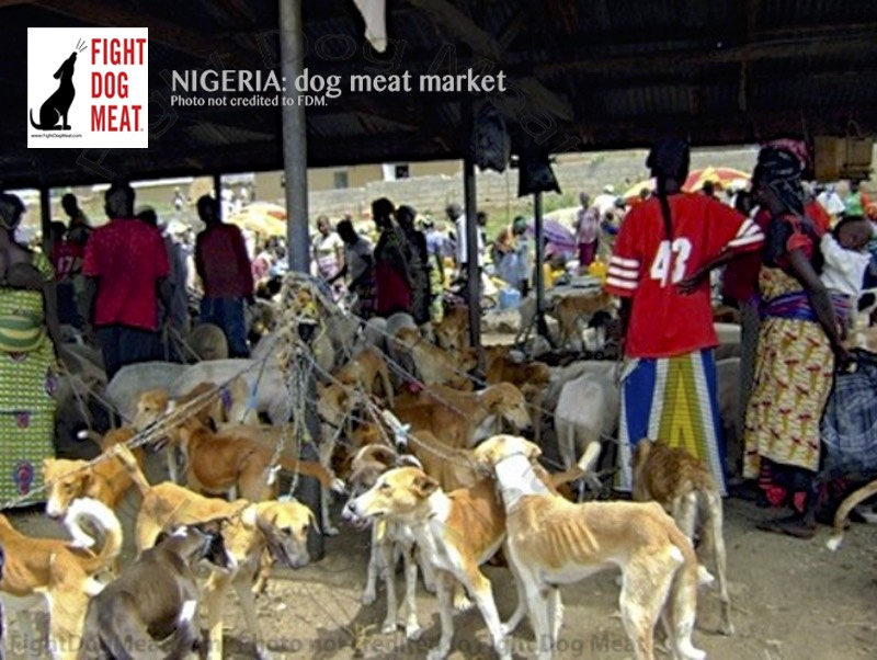 Nigeria: Dog Meat Dogs Exchanged For Palm Oil
