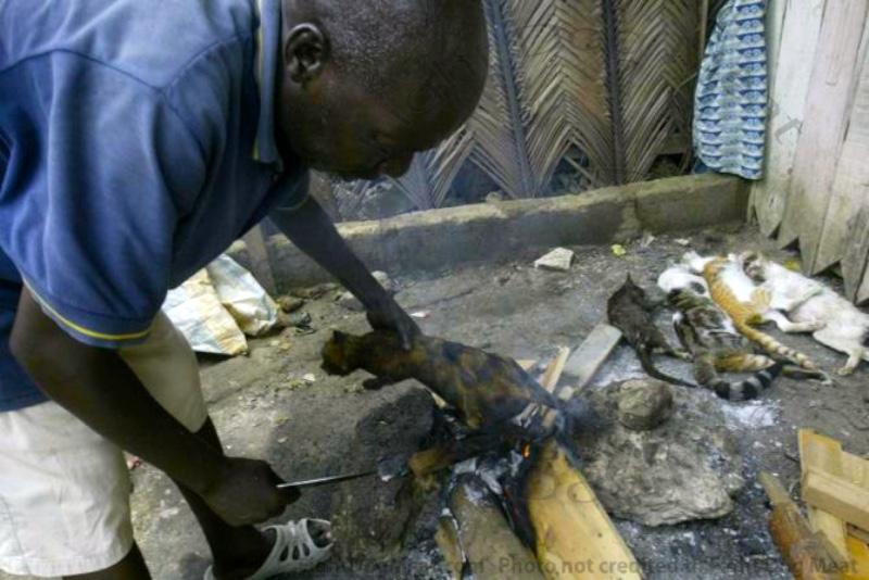 Africa, Ivory Coast: Roasted Cats