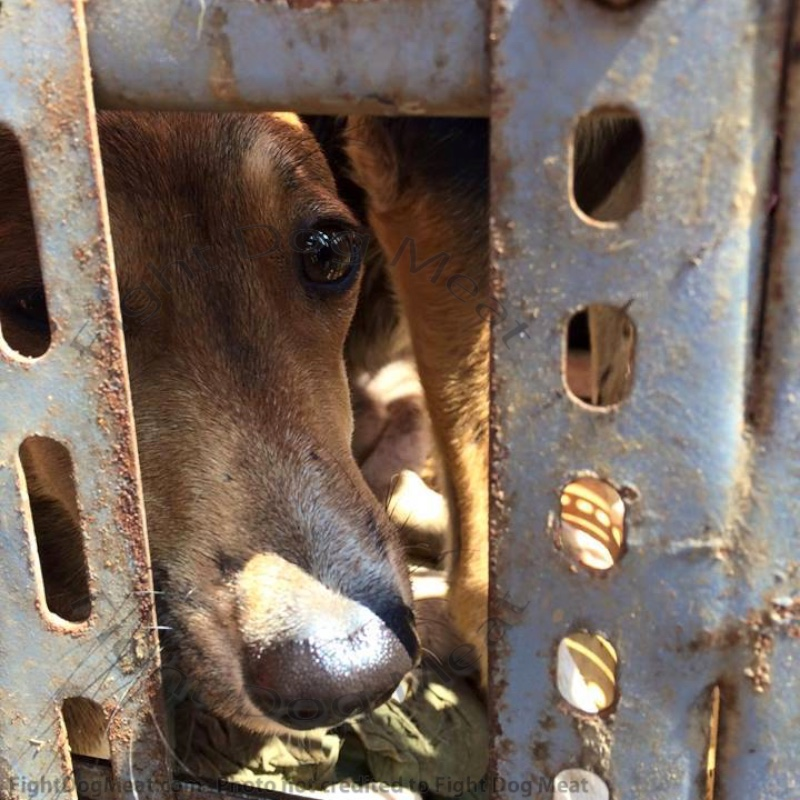 Mans' Best Friends: A Poem For Dog Meat Dogs and Cats