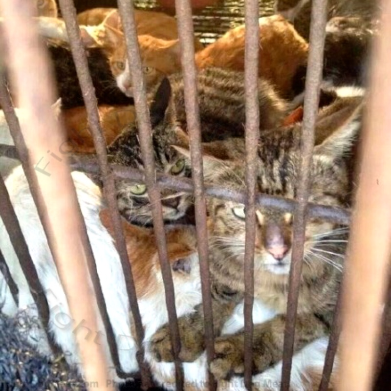 China: Cat Meat Marinated In Human Urine