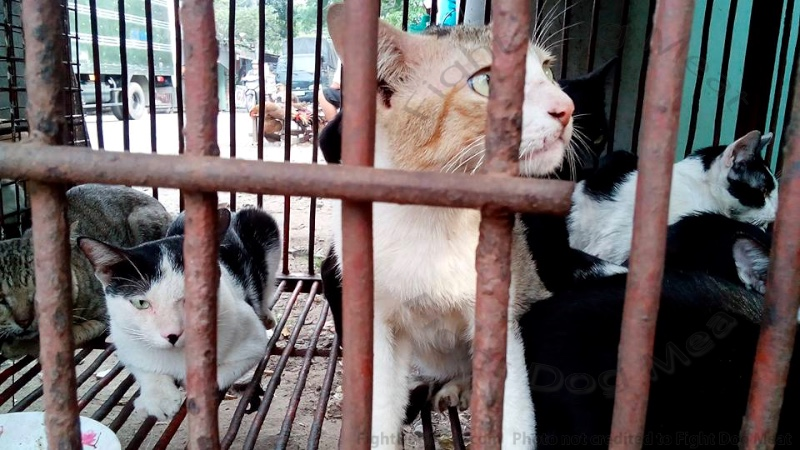 Vietnam: Cats Boiled For Cat Meat