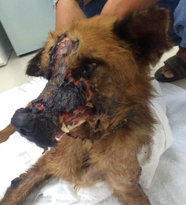 Vietnam: Dog Meat Dog 'Mo' Escapes With Severe Injuries, pt 1