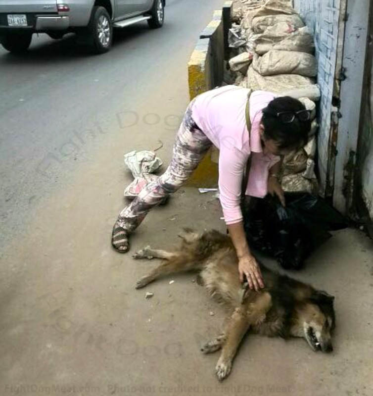 Cambodia: Dead Street Dog For Dog Meat