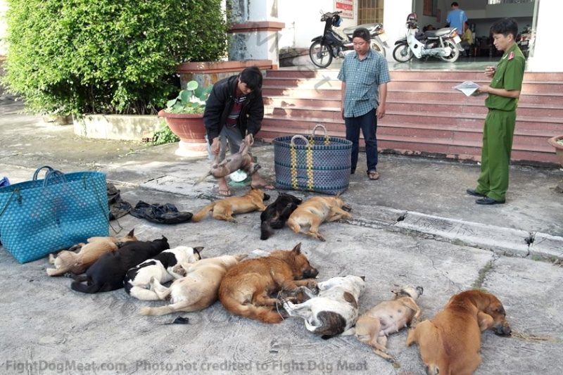 Vietnam: Police Arrest 2 Men With 13 Dead Dogs
