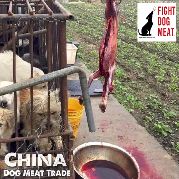 China: Dog Meat, Fur And Leather Trade