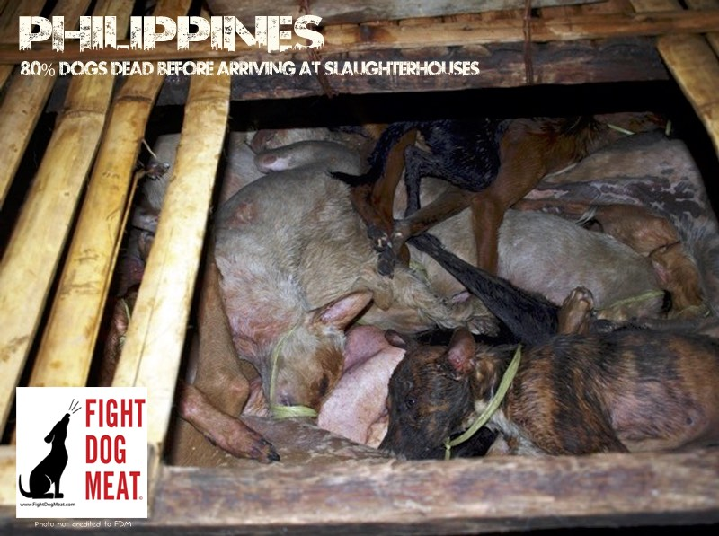 Philippines: Illegal Dog Meat Trade In Olongapo City