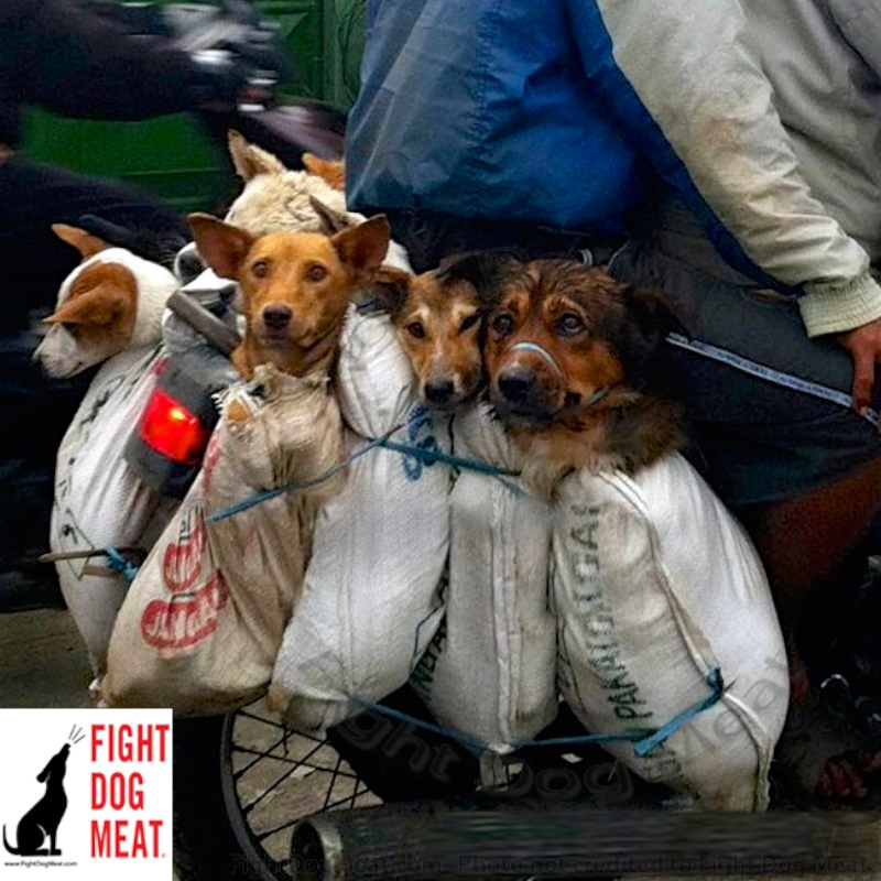 Indonesia: Dog Meat Dogs Sold To Slaughterhouse