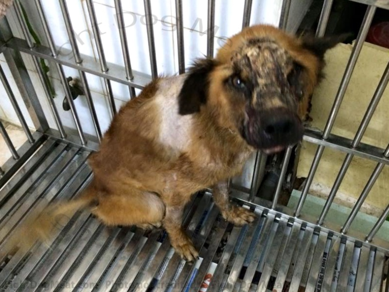 Update: Vietnam: 'Mo' Dog Meat Survivor, 3