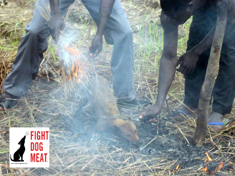 Africa, Nigeria: 38 People Die Eating Dog Meat With Gin