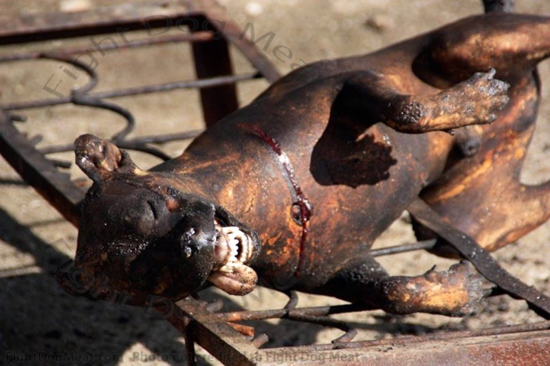 Africa, Namibia: Dog Meat Farmers
