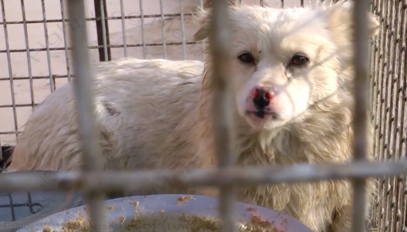 VIDEO, China: Cruel Dog Fur Trade