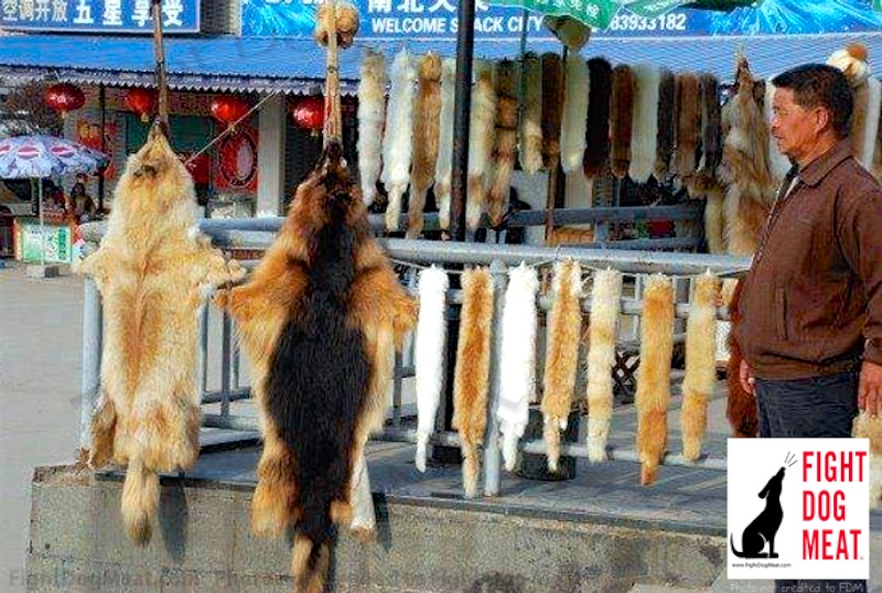 Canada: Dog and Cat Fur Sold, Linked To China's Dog Meat Trade