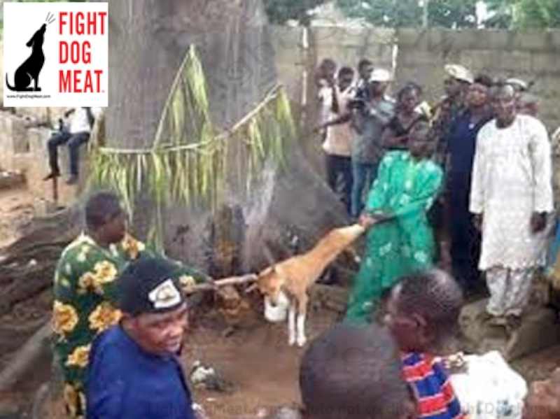 Nigeria, Africa: Dog Meat Does Not Cure Malaria Or Repel Witches
