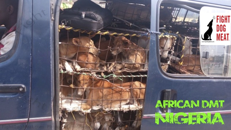 Nigeria: Dog Meat Dogs In A Van At A Gas Station