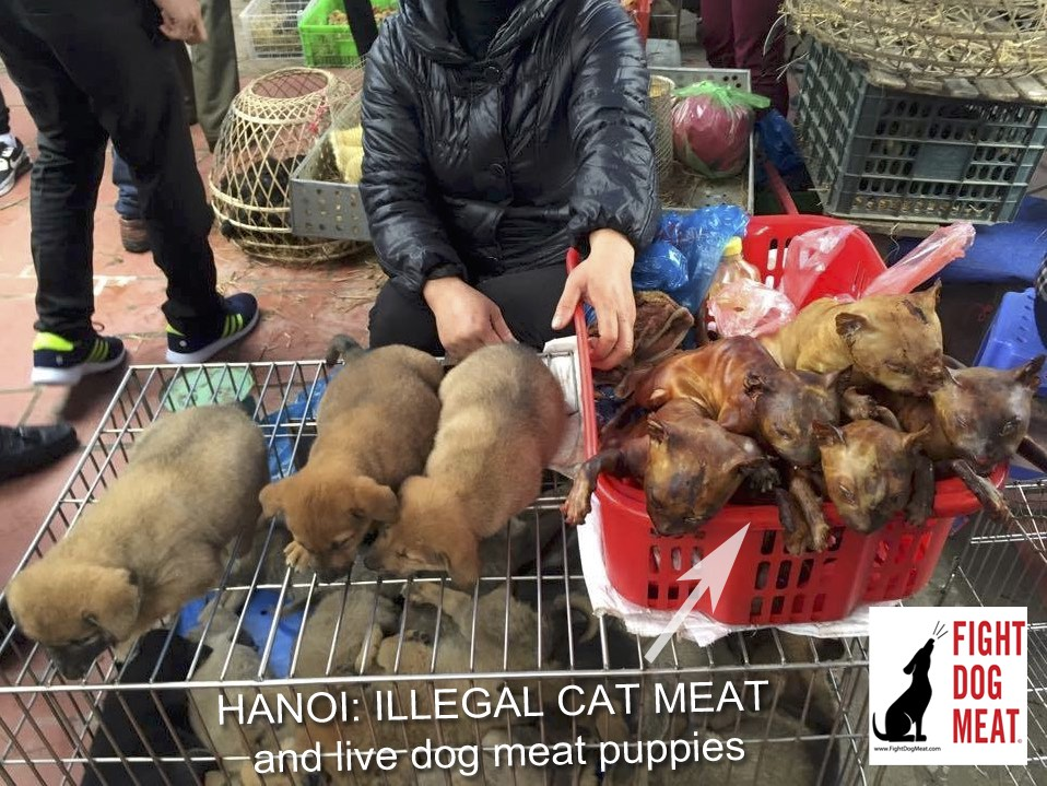 Vietnam – Hanoi: Illegal Cat Meat and Live Dog Meat Puppies
