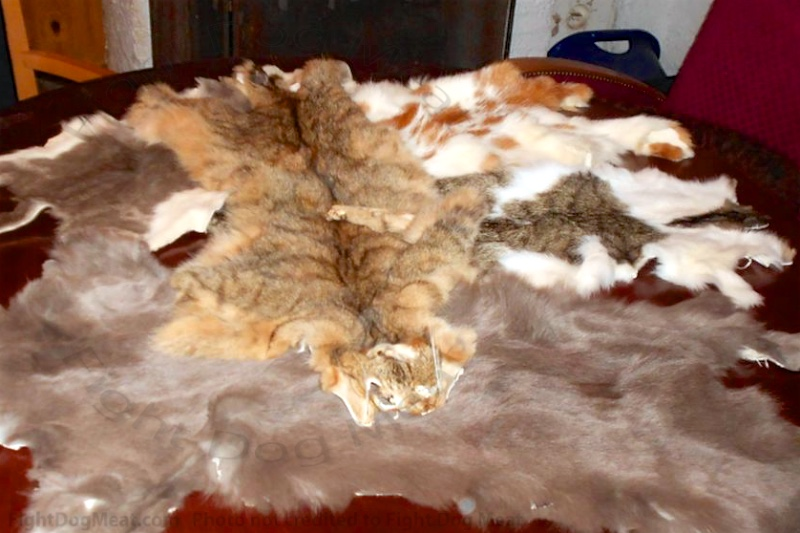 Switzerland: Brutal Dog And Cat Meat And Fur Skin Trade