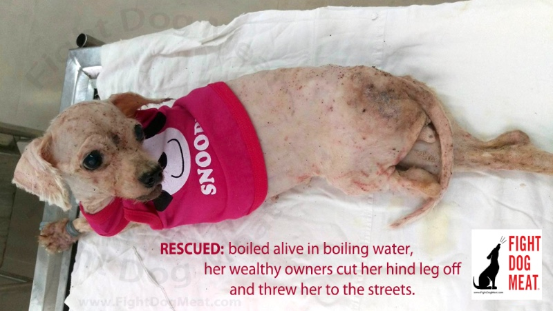 Vietnam: Rescued After Owner Cuts Off Pet Dog's Leg!