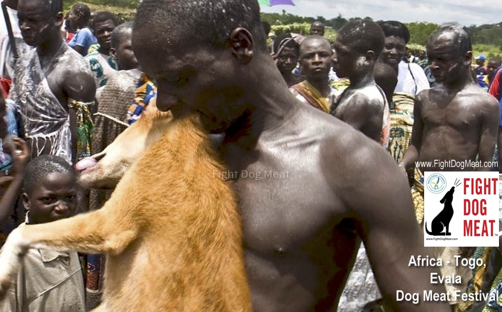 Togo, West Africa: Evala Dog Meat Festival