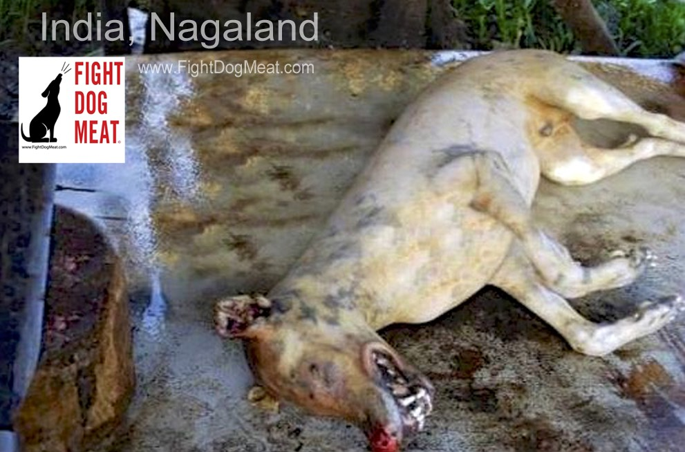 India: Nagaland Government Refuse To Ban Dog Meat
