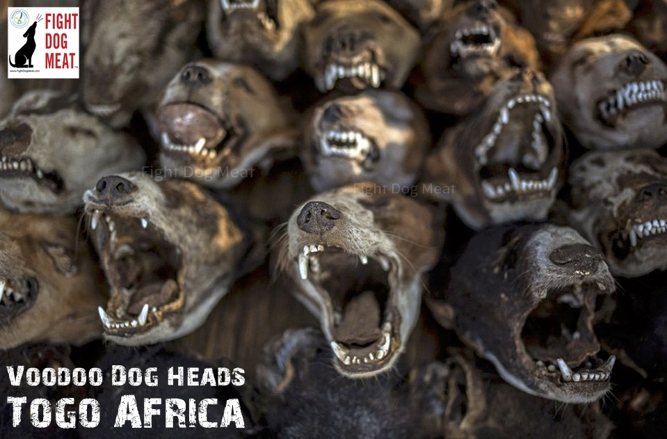 Africa: Two Week Dog Meat Eating Festival Evala