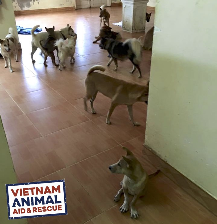Vietnam: Monthly Sponsors Needed For Rescued Dogs And Cats