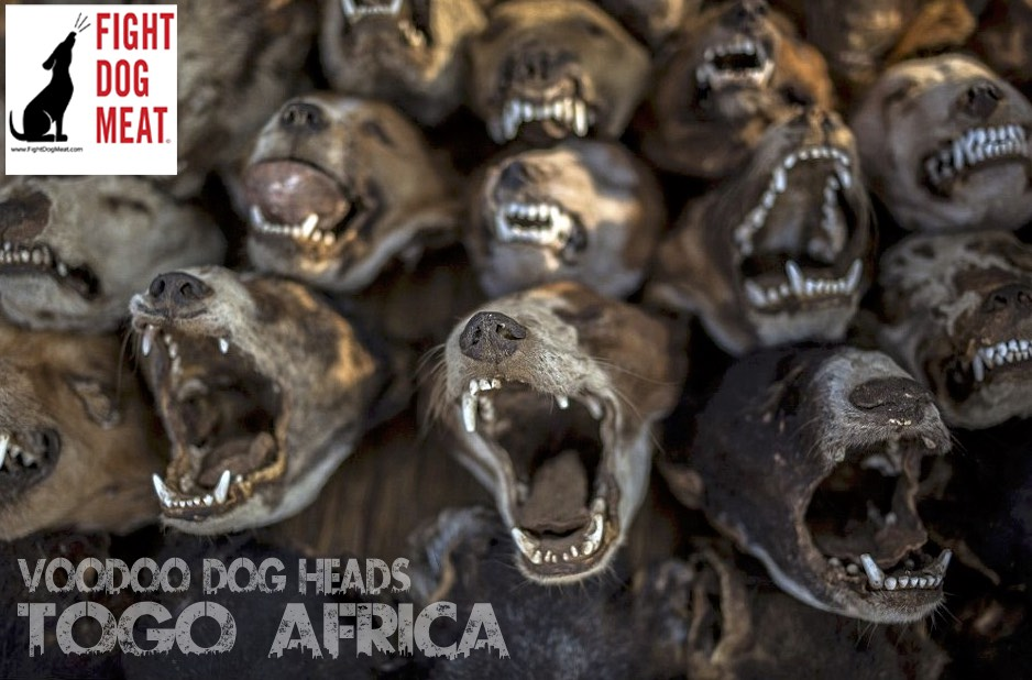 Africa: Two Week Dog Meat Eating Festival 'Evala'