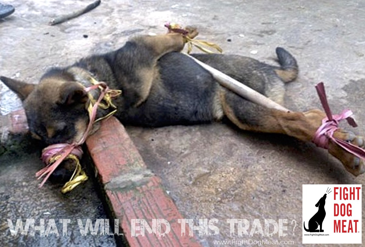 What Will End The Dog And Cat Meat Trade Fight Dog Meat
