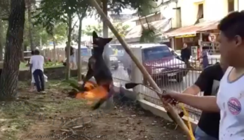 Fully Conscious Dog Set on Fire For Dog Meat, In A Busy Street