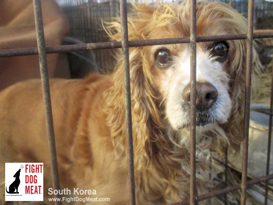 South Korea: BokNal – My First Hand Experiences At The BokNal Dog Meat Festival