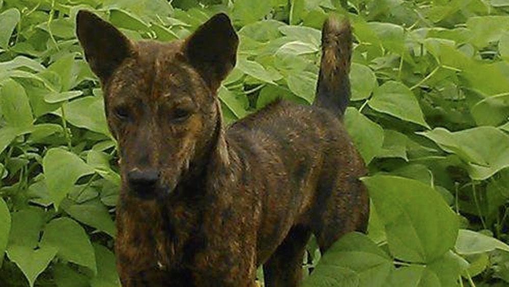 Vietnam: School Teacher's Stolen Pet Dog Held Hostage