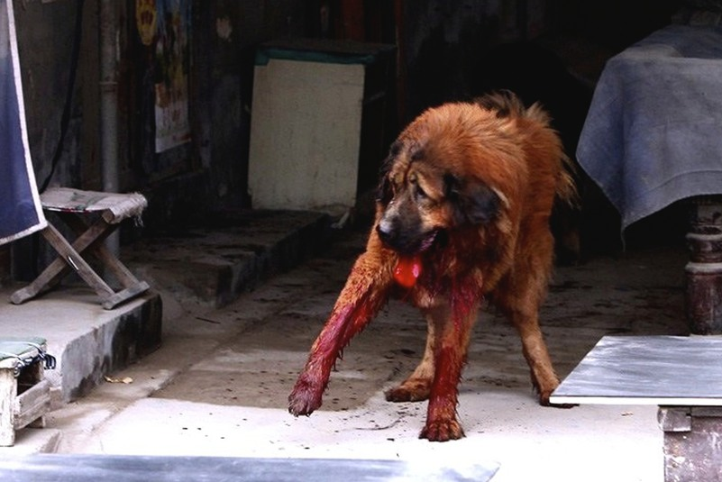 China: Beating People's Dogs To Death