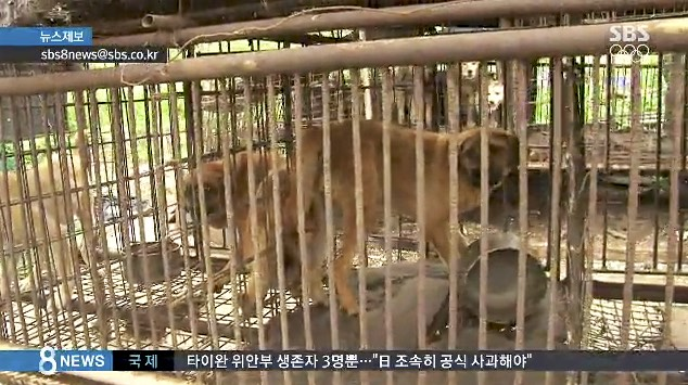 South Korea: Protest Against Dog Meat Restaurants On Korean TV