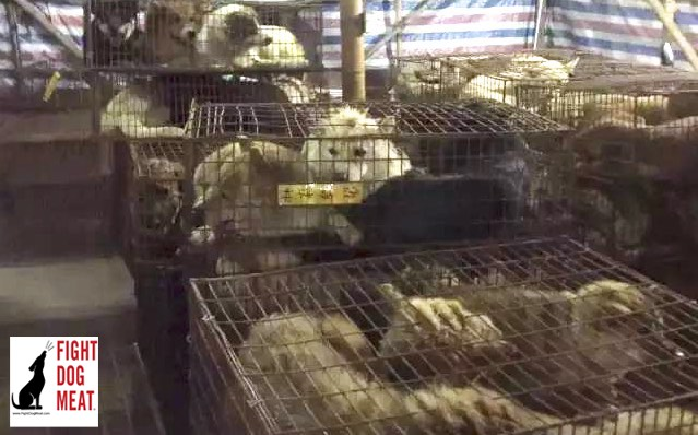 China: Dog Meat Truck Rescue 920