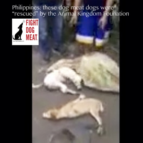 Philippines-Video: Rescued! By Animal Kingdom Foundation