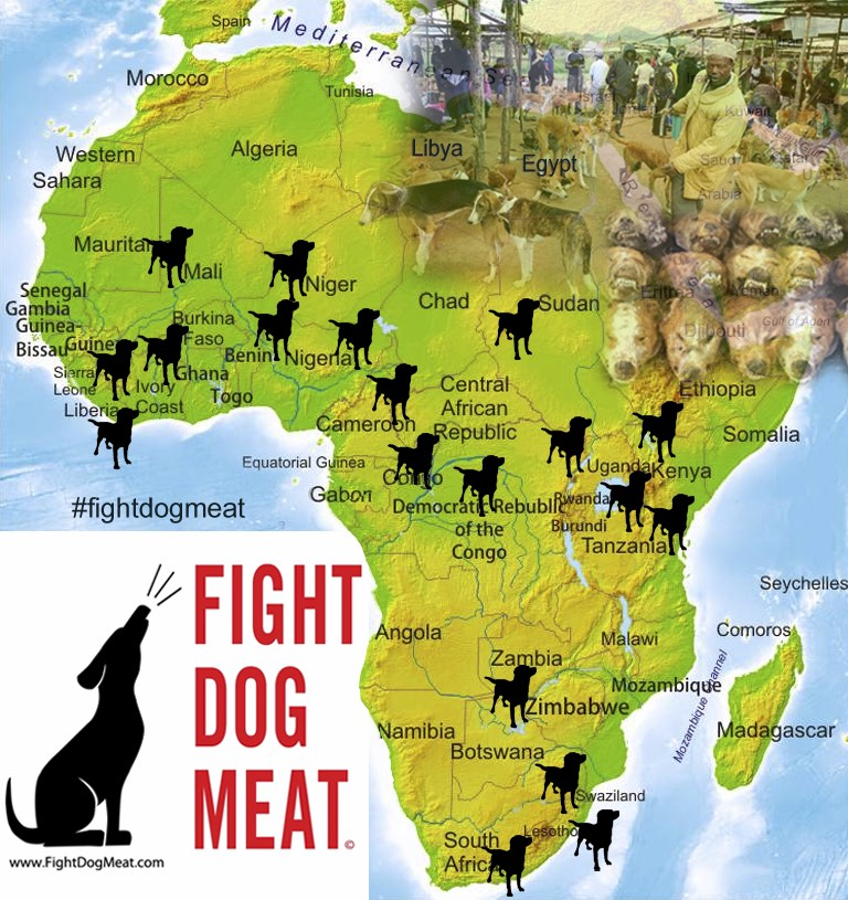 Africa: FDM's African Dog and Cat Meat Trade Announcement