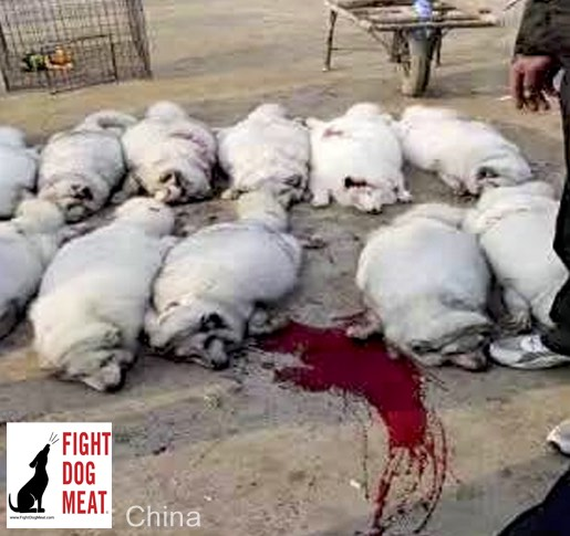 www.FightDogMeat.com, Haustier centric, #fightdogmeat