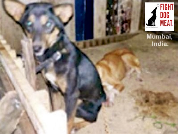 India – Mumbai: Illegal Dog Butcher Arrested By Police