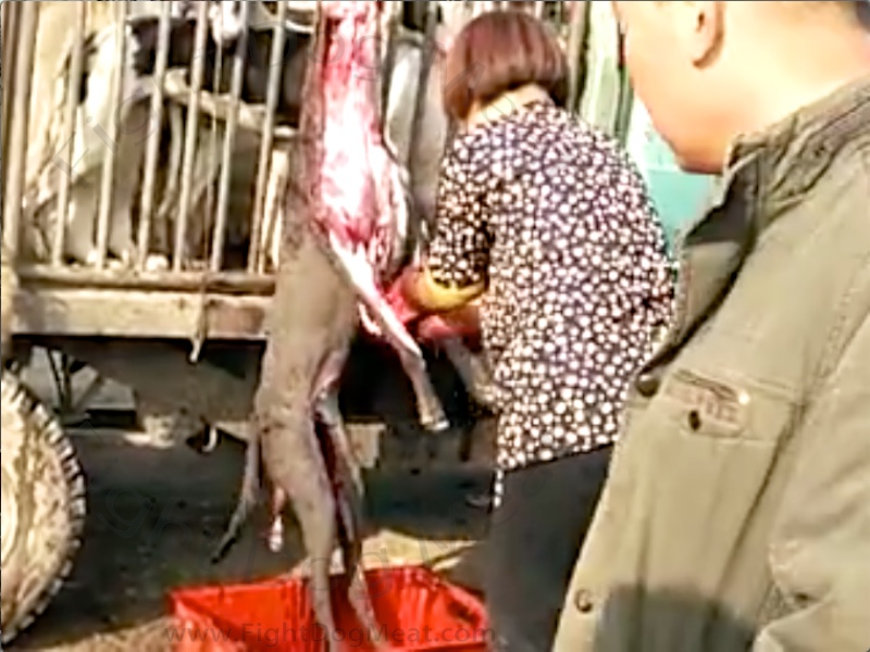 China – 6 Videos: Stolen Pets Being Slaughtered