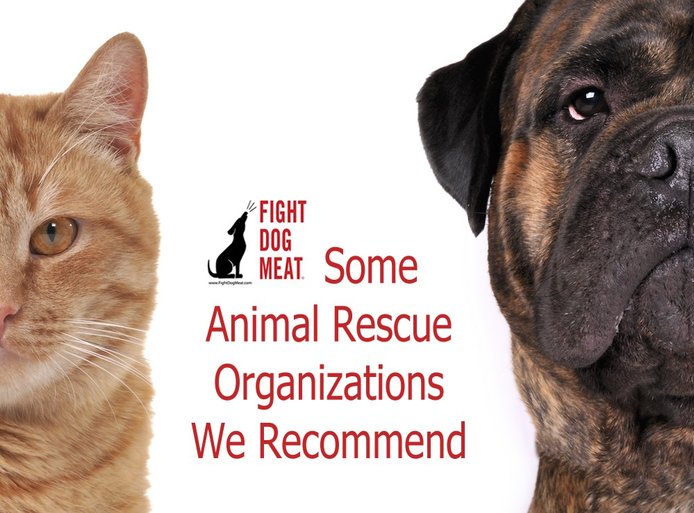 Some Animal Rescue Organizations We Recommend