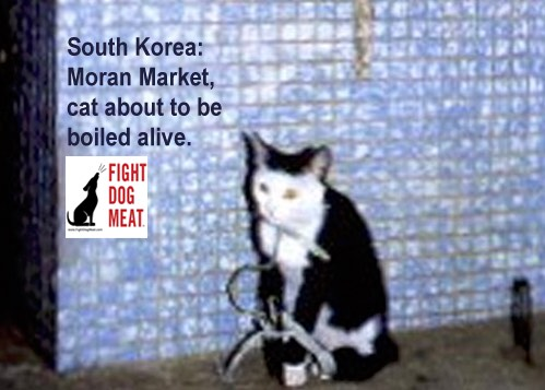 South Korea: Moran Market Is Closing Down