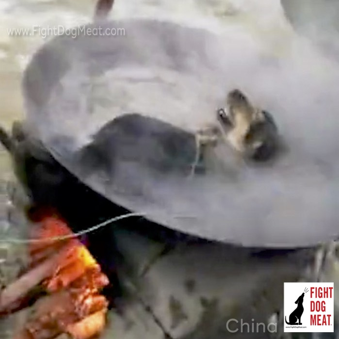 China – Video: Live Dog Boiled Alive