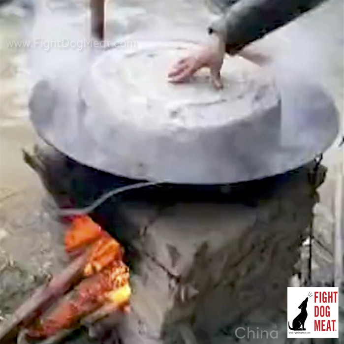 China - Video: Live Dog Boiled Alive - Fight Dog Meat