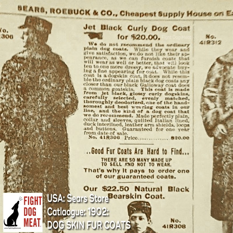 America: Dog-Skin Dog Fur Coats For Sale In The Sears Catalogue, 1902