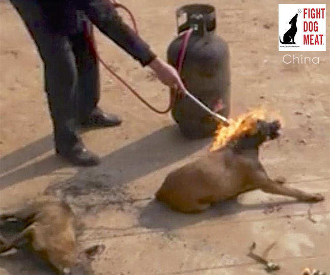China: Live Dog Burned Alive For Dog Meat