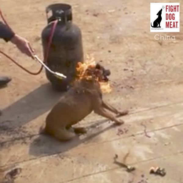 China: Live Dog Burned Alive For Dog Meat - Fight Dog Meat