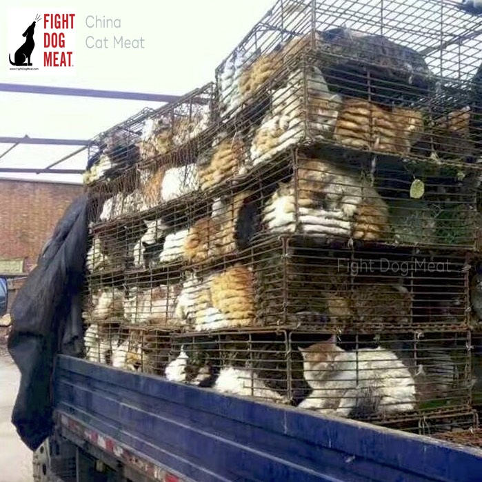 China: Live Cats in Fosham's Cat Meat Trade