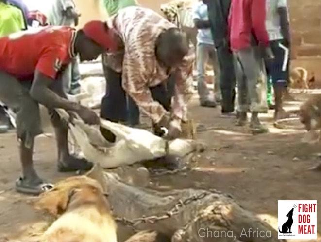 Ghana, Africa: Bolga's Live Dog Meat Market