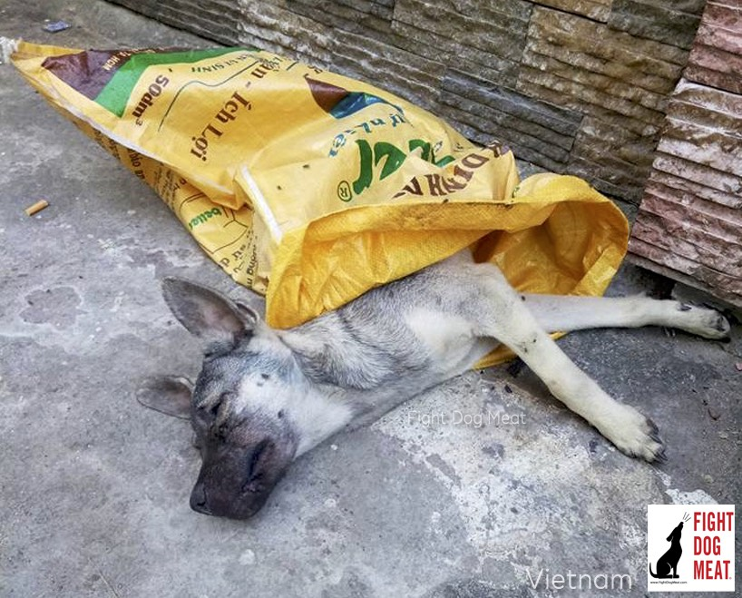 Vietnam: The Dog In A Plastic Bag Was Helped By Fight Dog Meat