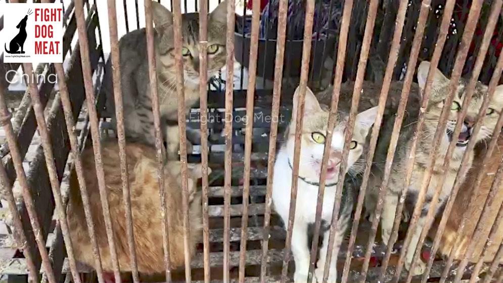 China: Cat Meat Restaurant In Hainin